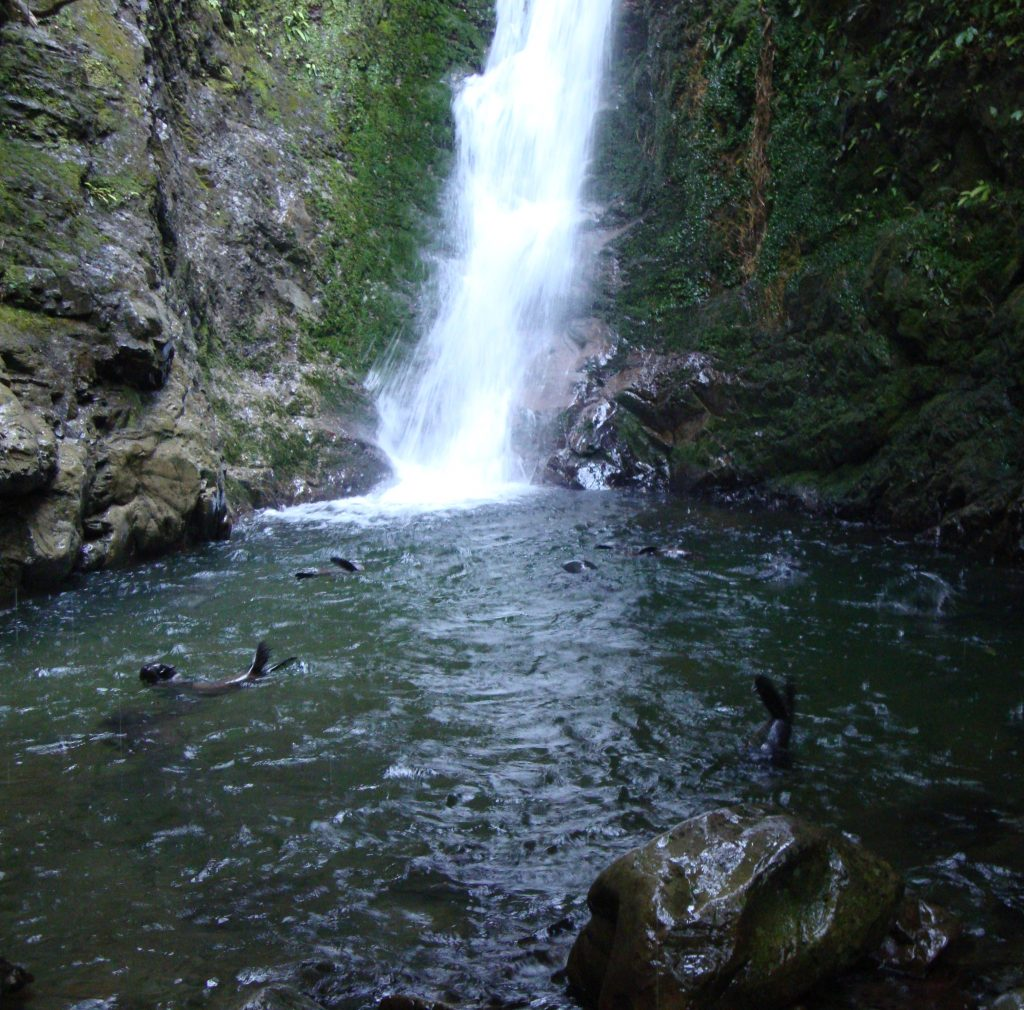 Ohau Waterfall And Fur Seal Pups In The Pool Below