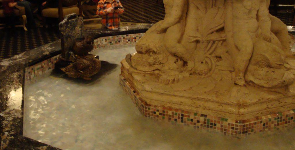 Peabody Ducks In Fountain