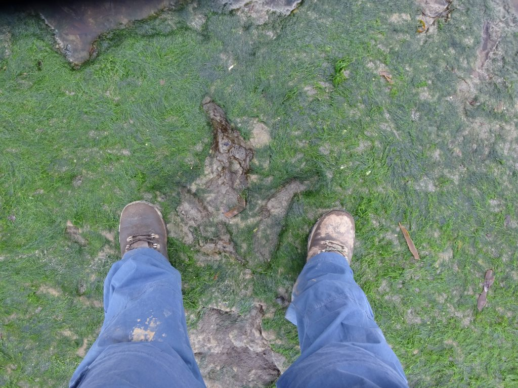 Dinosaur Footprint Compared With My Feet