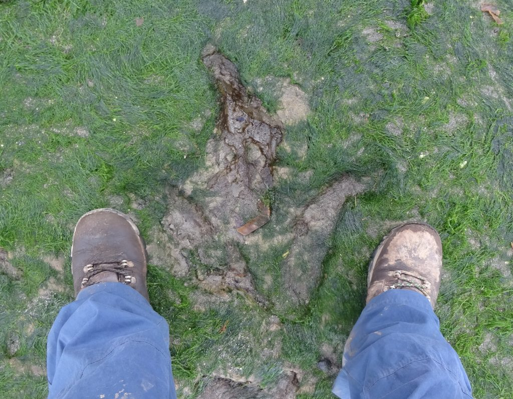 Dinosaur Footprint With My Feet For Reference