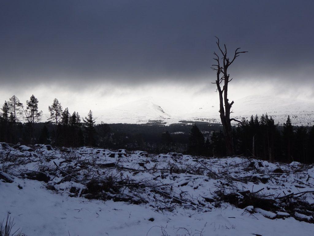 Ryvoan Trail