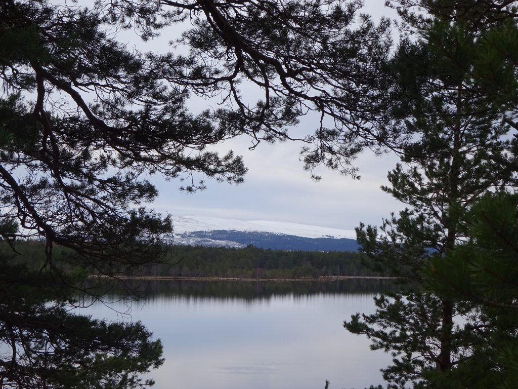 View Of Loch Morlich