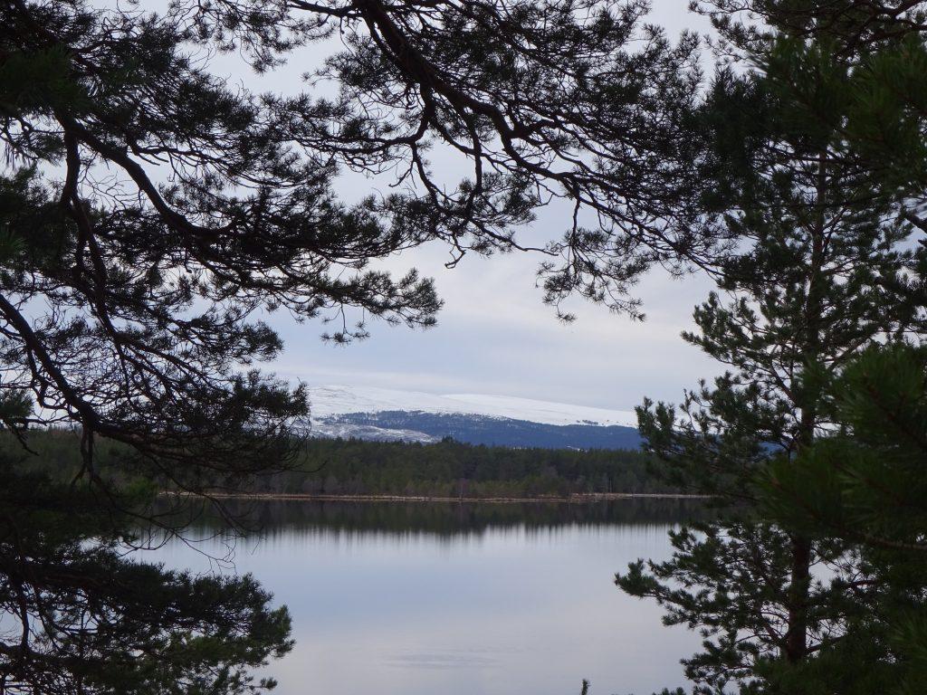 View Of Loch Morlich
