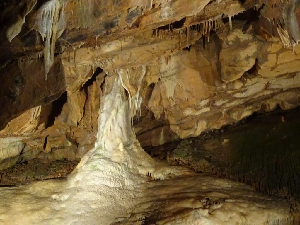 The Cat In Gough's Cave