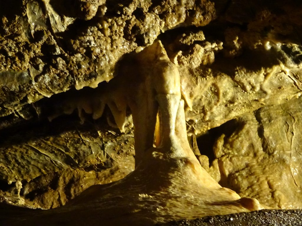 The Elephant In Gough's Cave