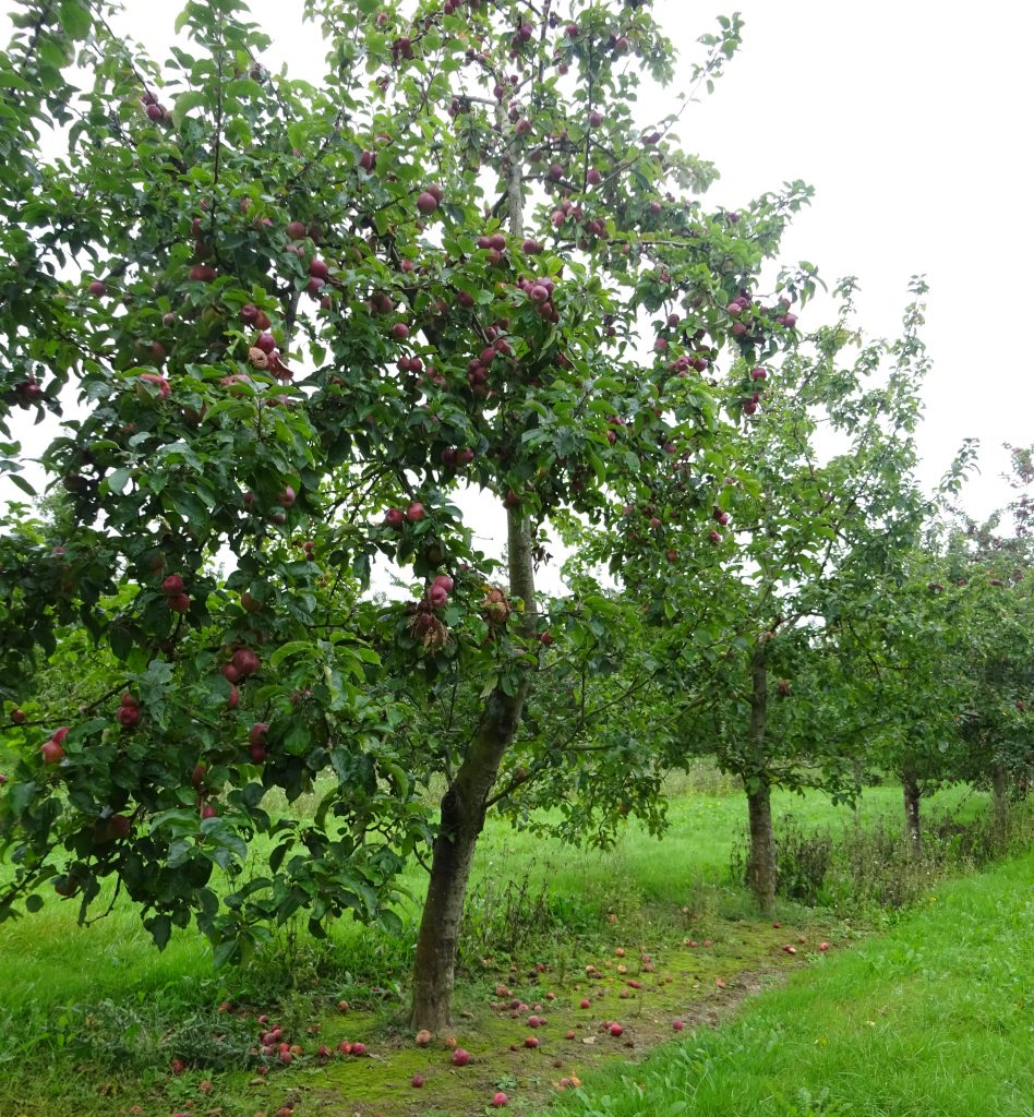 Sheppys Orchard