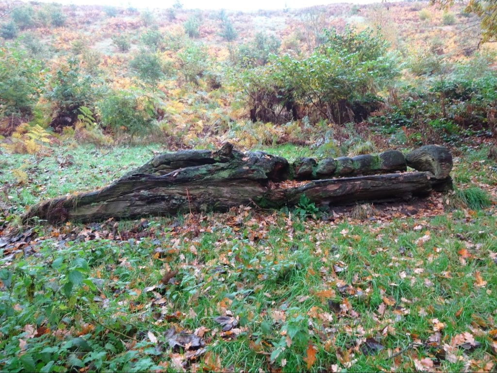 bench-log-lyme-park