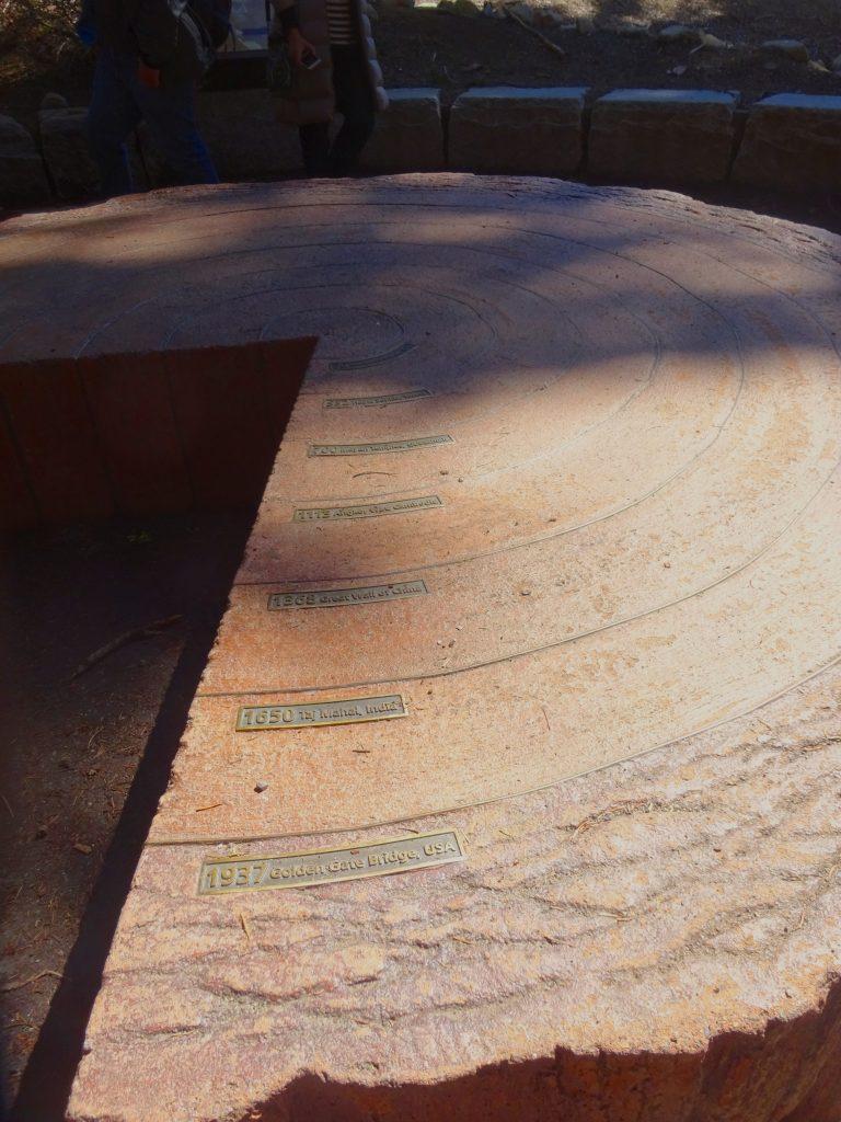 Sequoia Aging Rings