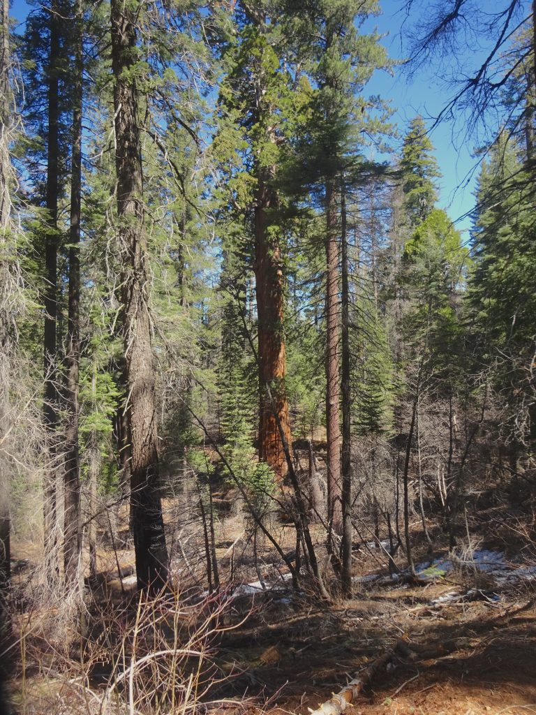 Start Of The Tuolumne Grove