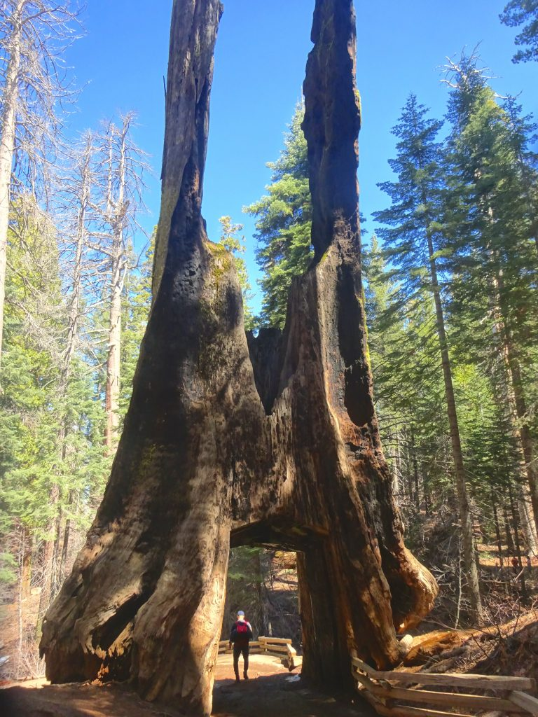 The Dead Walk Through Sequoia