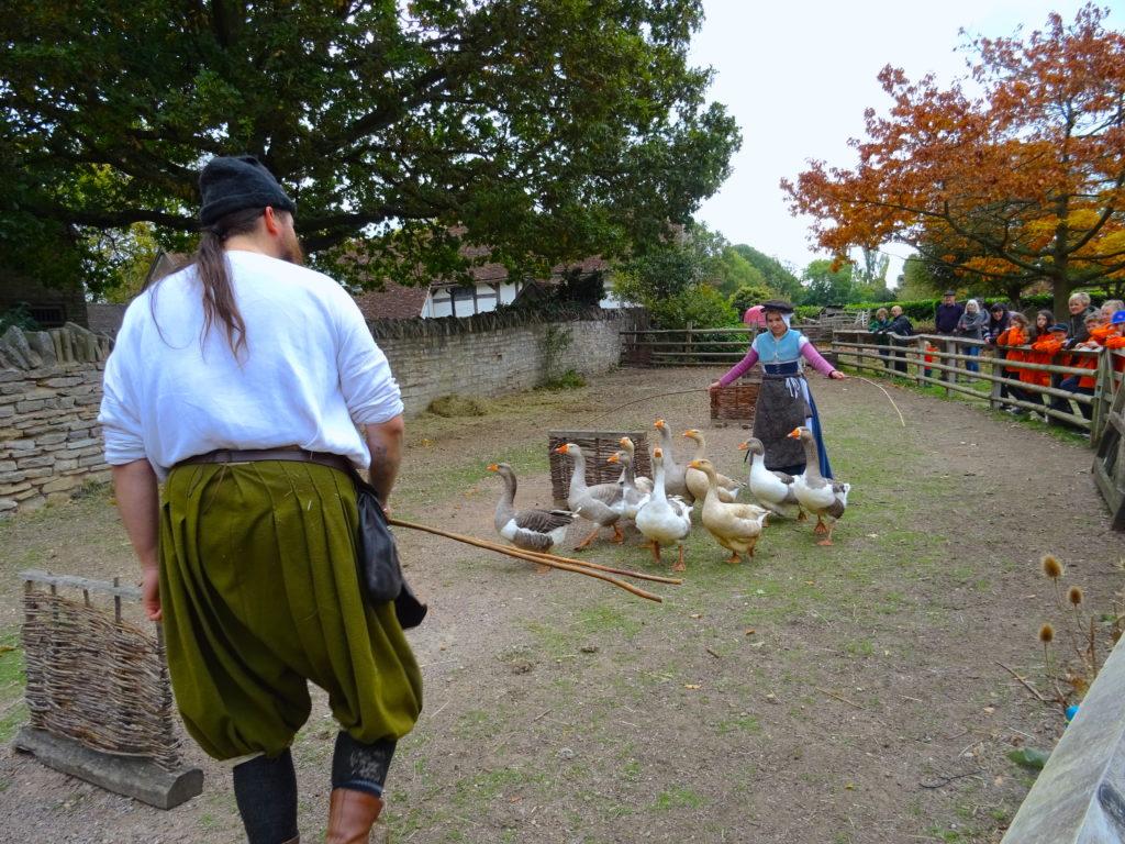 Goose Herding At Mary Arden's Farm