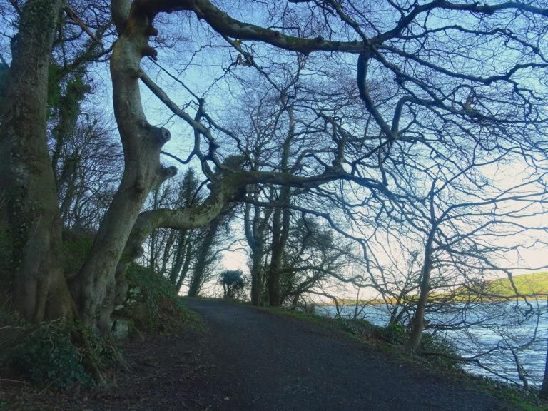 The Tree Where Three Tavern Girls Were Hanged