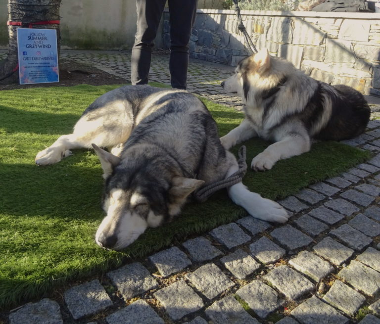 Meeting The Direwolves