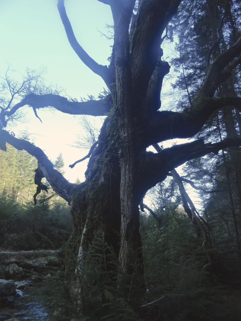 GoT Trees