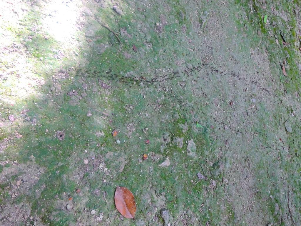 Ants Calakmul