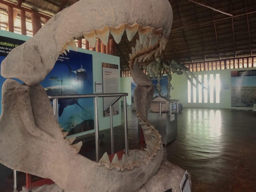 Shark Fossil Calakmul
