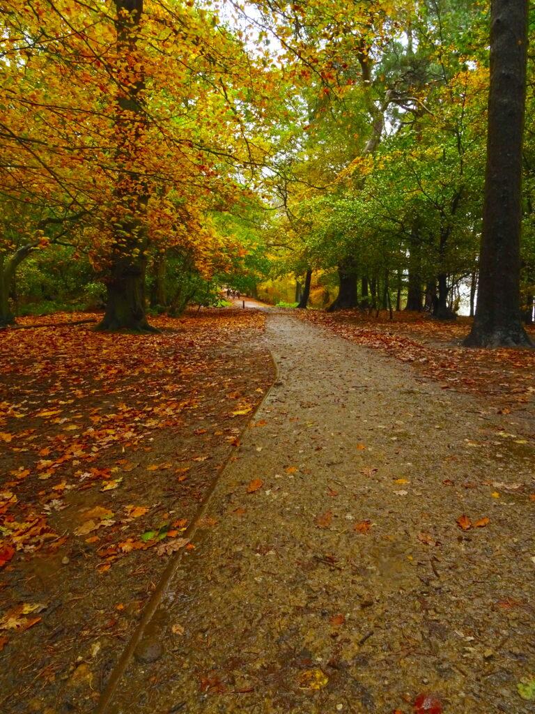 Path Through Autumnal Woods