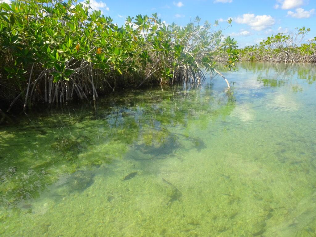 Mangroves At Sian Ka'an Biosphere Reserve